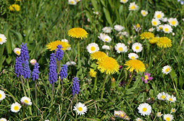 草地上形态各异的花朵