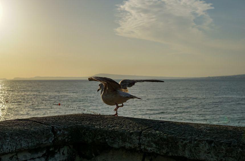 阿马尔菲海岸、意大利、鸥