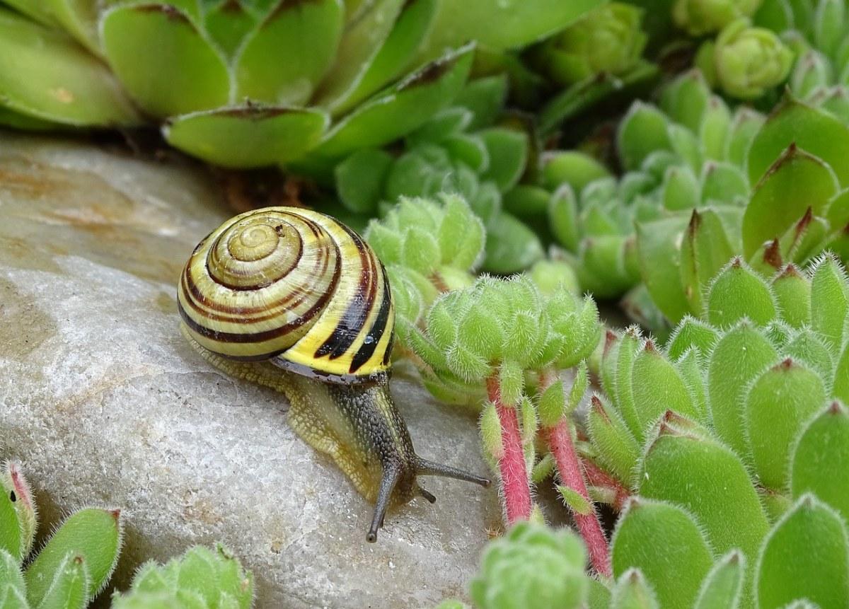 蜗牛、壳、慢慢地