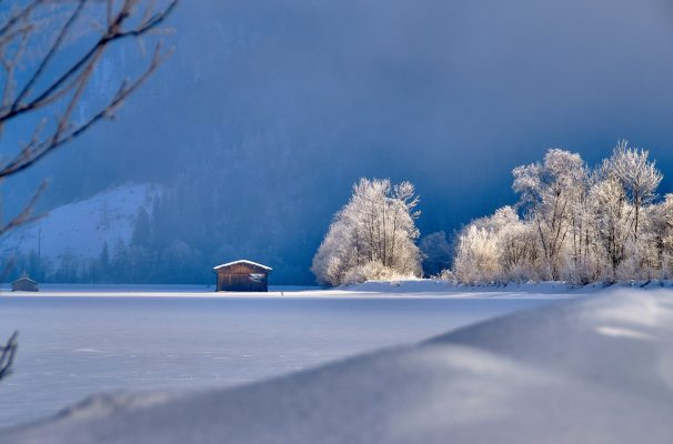 冬天的雪地与树