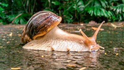 雨后路上的一只蜗牛