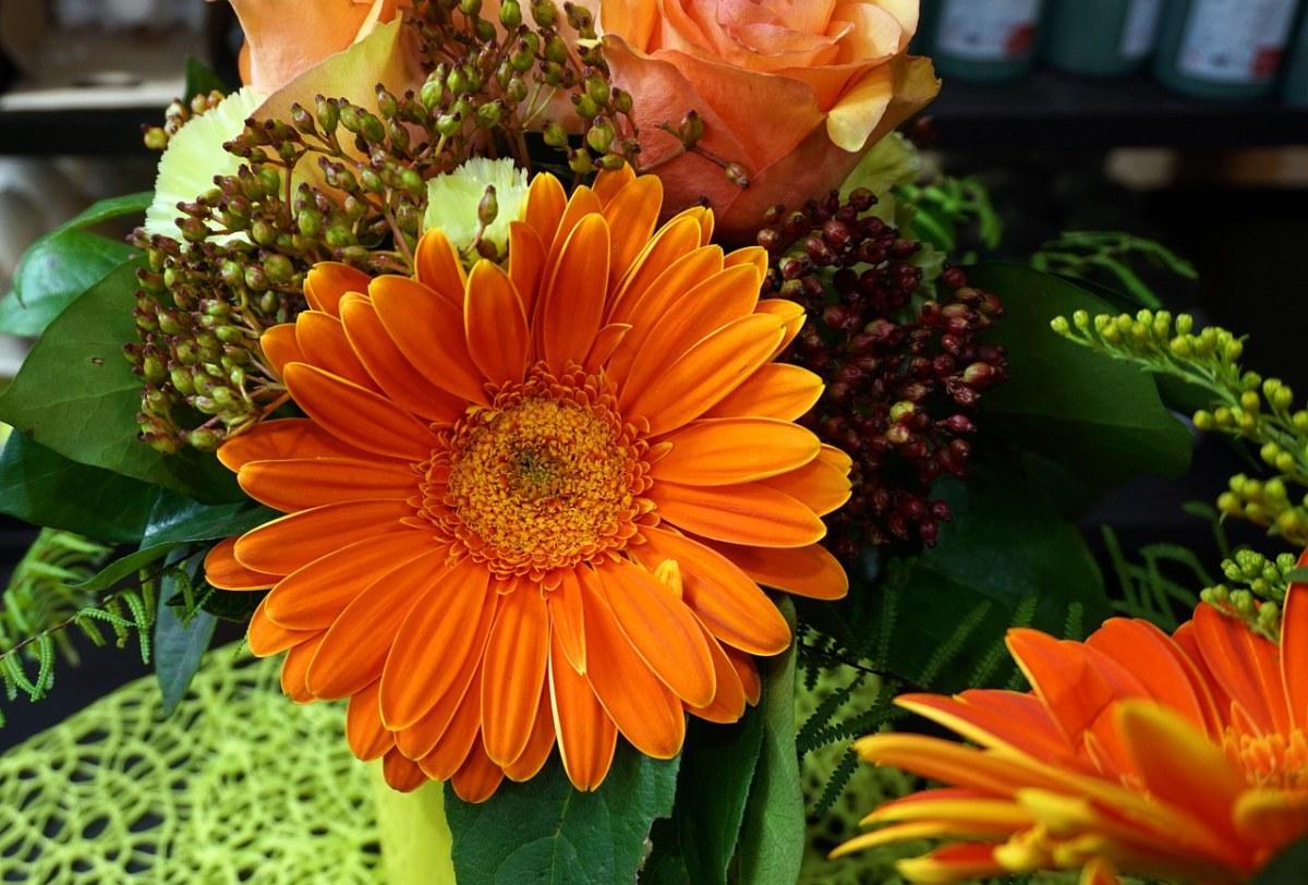 橙色的非洲菊花朵