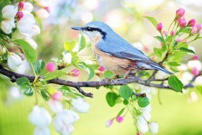 鸟语花香的图片