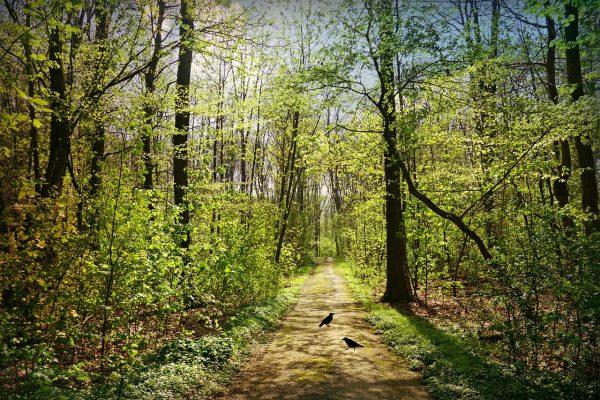 春天树林中的道路