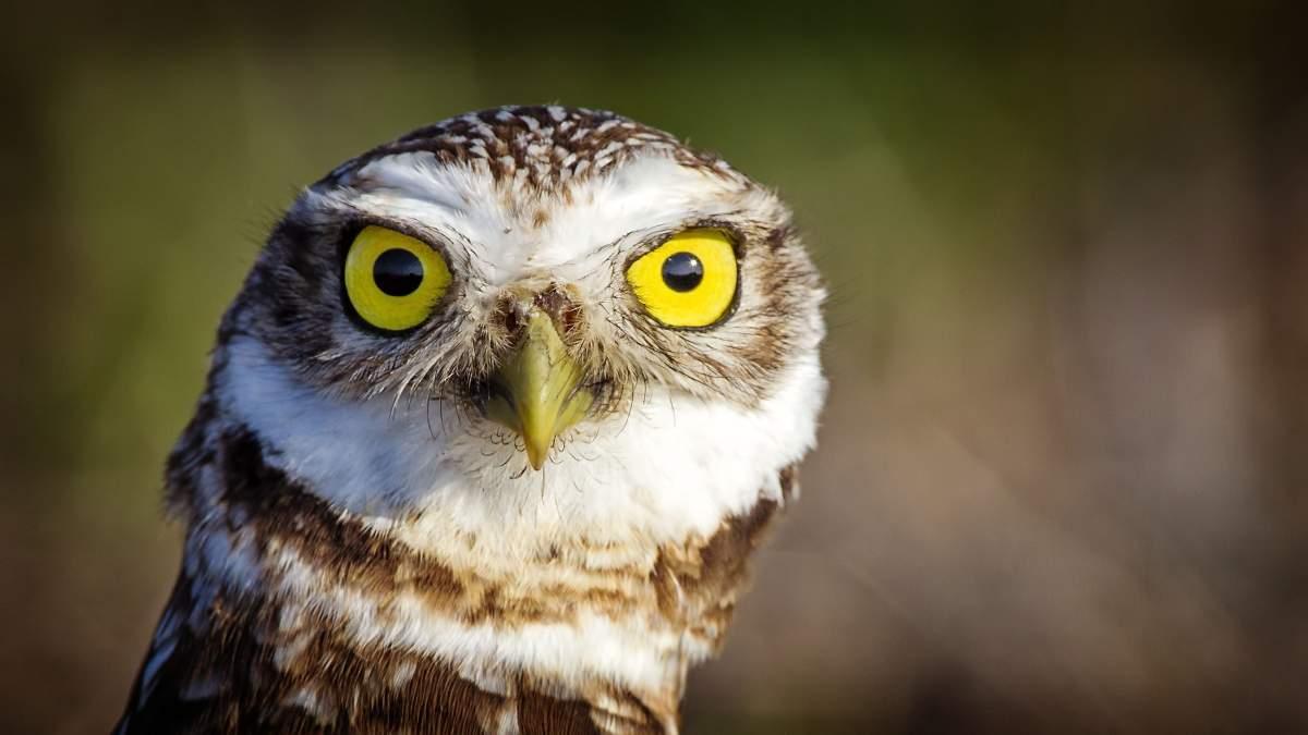 猫头鹰图片 2560×1440