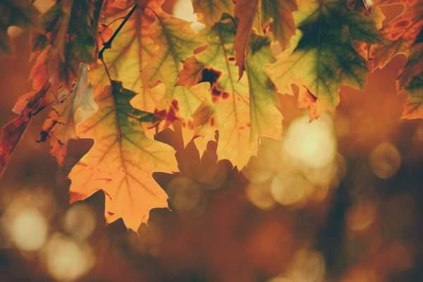 秋天的枫叶背景图片